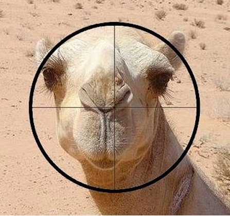 Time of cash in on carbon credits smoke a camel